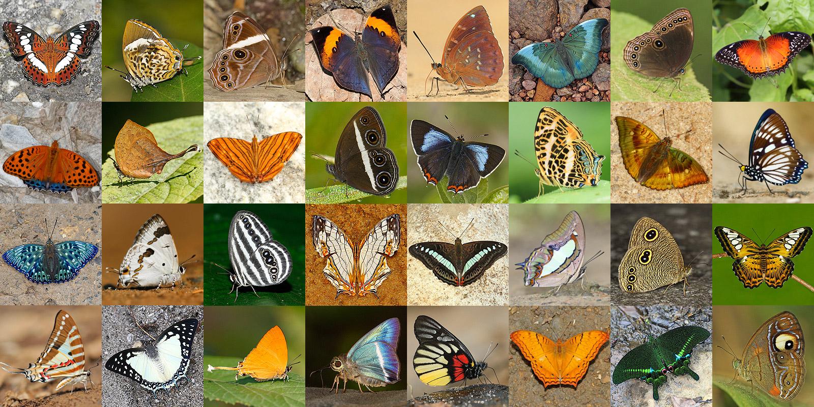 Natura 2018  - Istituto Comprensivo S.Colonna