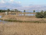 Lagoons of Kerkyra - Important Bird Areas
