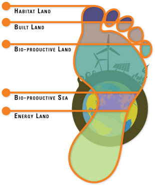 Calculating the Ecological Footprint